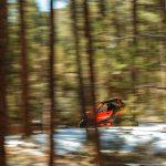 Maverick Sport DPS – Can-Am red – Trail 6